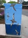 Image for Seagulls - Live Oak, CA