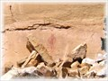 Image for Lone Warrior Rock Art