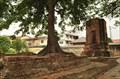 Image for Wat Khok Muang - Ayutthaya, Thailand