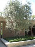 Image for Diana Weaver - Santa Fe Springs, CA