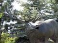 Image for Samson, the Elk - Estes Park, CO