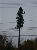 Image for Pine Tree Cell Tower - New Castle, Delaware
