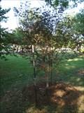 Image for Donald L. Betz tree - University of Central Oklahoma - Edmond, OK