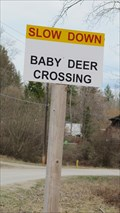 Image for Slow Down Baby Deer Crossing - Robson, British Columbia
