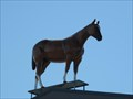 Image for Welsh's Horse on Top - Edmonton, Alberta