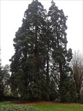 Image for Sequoias , Prebendes garden Tours France.