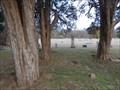 Image for E.J. Foster - Dixie Cemetery - Dixie, TX