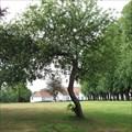 Image for Old Apple Tree - Nordborg, Denmark