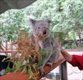Image for Koala Park - West Pennant Hills, Australia