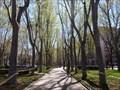 Image for Paseo del Prado - Madrid, Spain