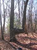Image for Elvis Confluence Trail Tree- Virginia