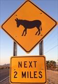 Image for Burro Crossing near Lake Havasu, Arizona