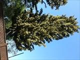 Image for Pine Trees Towers - Los Altos, CA