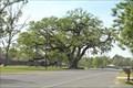 Image for The Blanchard Oak - Labadieville, LA