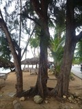 Image for 100% natural wood bench, Las Terrenas, Samana, Dominican Republic