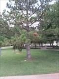 Image for John R. Barrier Tree - Ted Anderson Park - Edmond, OK