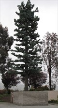 Image for Evergreen Tree Cell Tower - Morgan Hill, CA