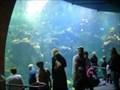 Image for Steinhart Aquarium: California Academy of Sciences - San Francisco, CA