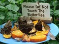 """Image for """"Niagara Butterfly Conservatory"""" - Niagara Falls Ontario, CA."""
