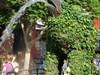 Dinosaur - Topiary