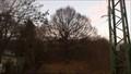 Image for Dub zimni (Cornish oak), Chomutov, Czech Republic