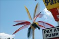 Image for Grand ParadiseTruckstop Electric Palm - Pine Grove, LA