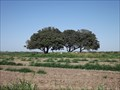 Image for Garcia Cemetery - Lasara TX