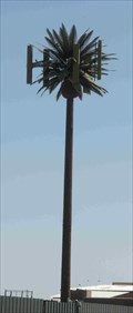 Image for Talking Palm Tree (Litchfield Rd & Hwy 85)