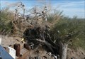 Image for Amboy Shoe Tree EAST on Route 66 California