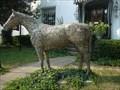 "Image for ""Not So Plain Joe"" Horse - Lexington, KY"