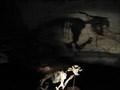 Image for Megafauna Fossil Site - Victoria Cave, Naracoorte SA