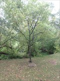 Image for John Crolly - Battlefield Park - Stoney Creek, ON