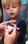 Image for Hummingbird Festival - Covington, Georgia, USA