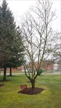 Image for A.G. Hollander, MD - Roseburg, OR