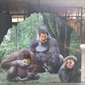 Image for Be an ape! - Rhenen (NL)