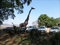Image for Giraffe  -  Malkerns, Swaziland