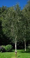 Image for Douglas Karagher - Tynwald National Park and Arboretum - St. John's, Isle of Man