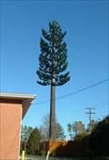 Image for Pine Tree Cell Phone Tower, Durham, North Carolina