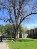 Image for Elm Tree - Davis, CA