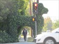 "Image for Hayvenhurst Dog Topiary - ""Zippy's Inner Spiritual Life"" - North Hills, CA"