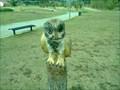 Image for Owl - Lisboa, Portugal