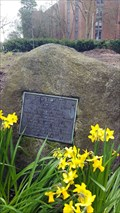 Image for Scion of the Washington Elm - Seattle, WA