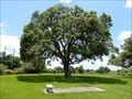 Image for Stephen F Austin Death Site Oak - West Columbia, TX