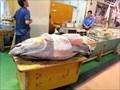 Image for Tsukiji Fish Market - Tokyo, Japan