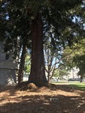 Image for JS Dumser - Berkeley, CA