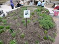 Image for Morton Arboretum Monarch Waystation - Lisle, IL