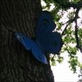 Image for Un papillon à cheverny - France