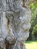Image for Devil's Face Emerges - Provo, Utah