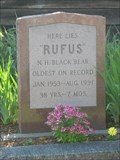Image for Rufus the Bear