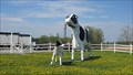 Image for Buttercup the Cow and Daisy the Calf - Sussex, New Brunswick